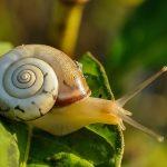 Come rendere più veloce il tuo sito in WordPress: 8 metodi – senza essere uno specialista