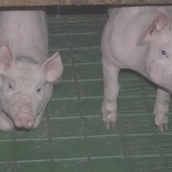 Hosting, come comunicare: 12 domande da porci (VPS)