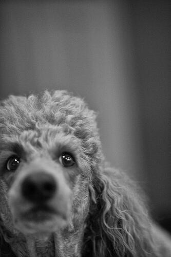 Poodle, la falla informatica che affligge le vecchie versioni di SSL (News)