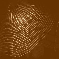 Come entrare nel deep web / dark web?