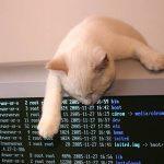 Nuova falla su OpenSSH: rischio brute-force
