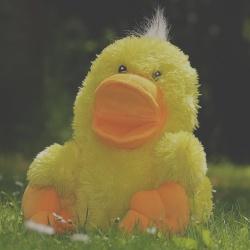 DuckDuckGo: panoramica di base sul motore di ricerca