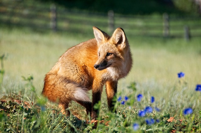 Meglio aggiornare subito Firefox all'ultima versione! (News)