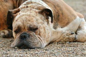 Come utilizzare il lazy loading per immagini e video in WordPress