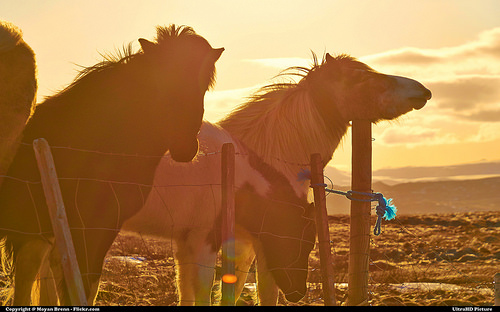 Domini .horse: come e dove registrarne uno (Guide, Mondo Domini)