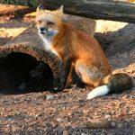 Estensioni di Firefox obsolete: a breve molte potrebbero smettere di funzionare