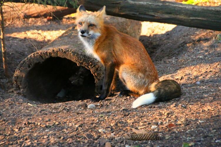 Estensioni di Firefox obsolete: a breve molte potrebbero smettere di funzionare (News)