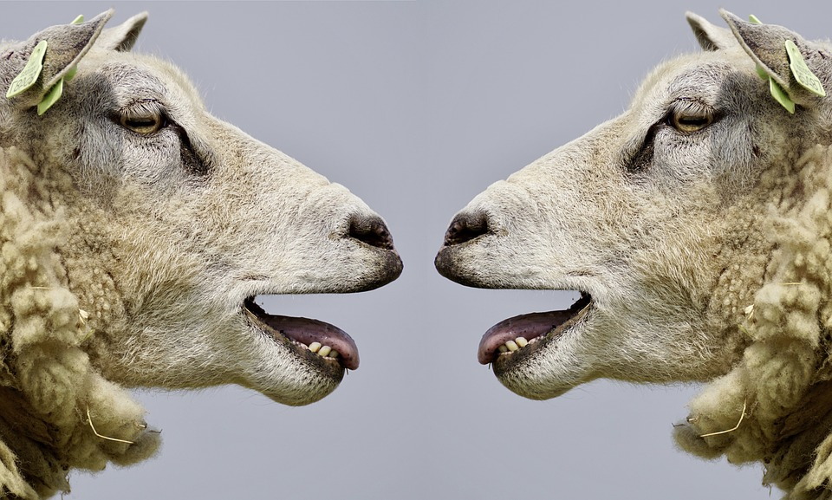 SEO e WordPress: la guida che pensa fuori dal gregge