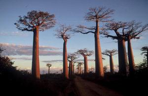 """<span class=""""entry-title-primary"""">Domini .mg: come e dove registrarne uno</span> <span class=""""entry-subtitle"""">Informazioni utili sul gTLD ufficiale del Madagascar</span>"""