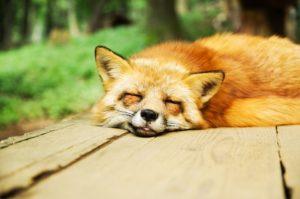 Problemi ad aggiornare o installare addon di Firefox? Aggiornalo all'ultima versione
