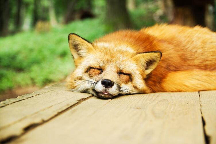 Problemi ad aggiornare o installare addon di Firefox? Aggiornalo all'ultima versione (News)